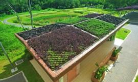 extensive roof - elmich - pasir ris park04