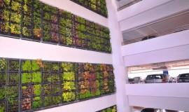 green wall - elmich - nuh01