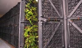 green wall - elmich - nuh04