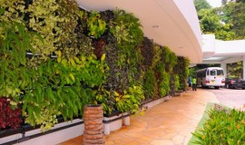 green wall - elmich - rasa01