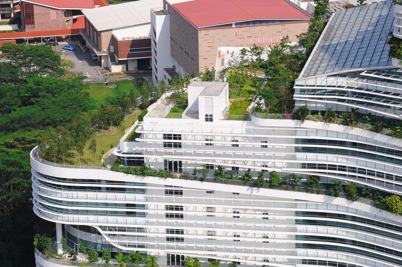 Elmich Green Roof At Solaris Fusionopolis Elmich Pte Ltd