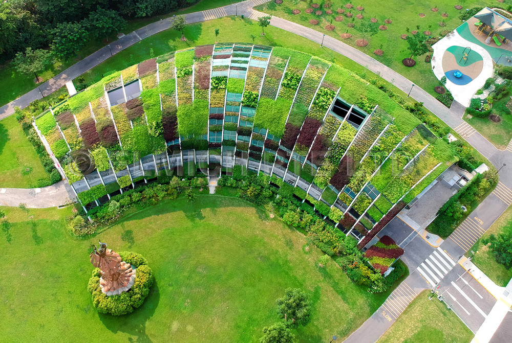 An aerial view of the fully matured green roof.