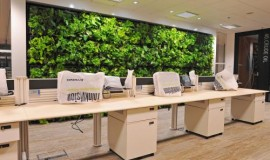 green wall - elmich - mbfc02