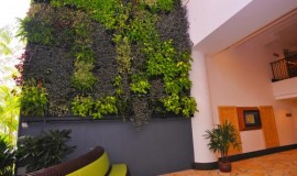 green wall - elmich - rasa03