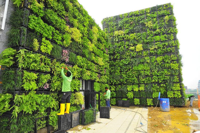 Award Winning Green Wall At Orchard Central Mall Elmich