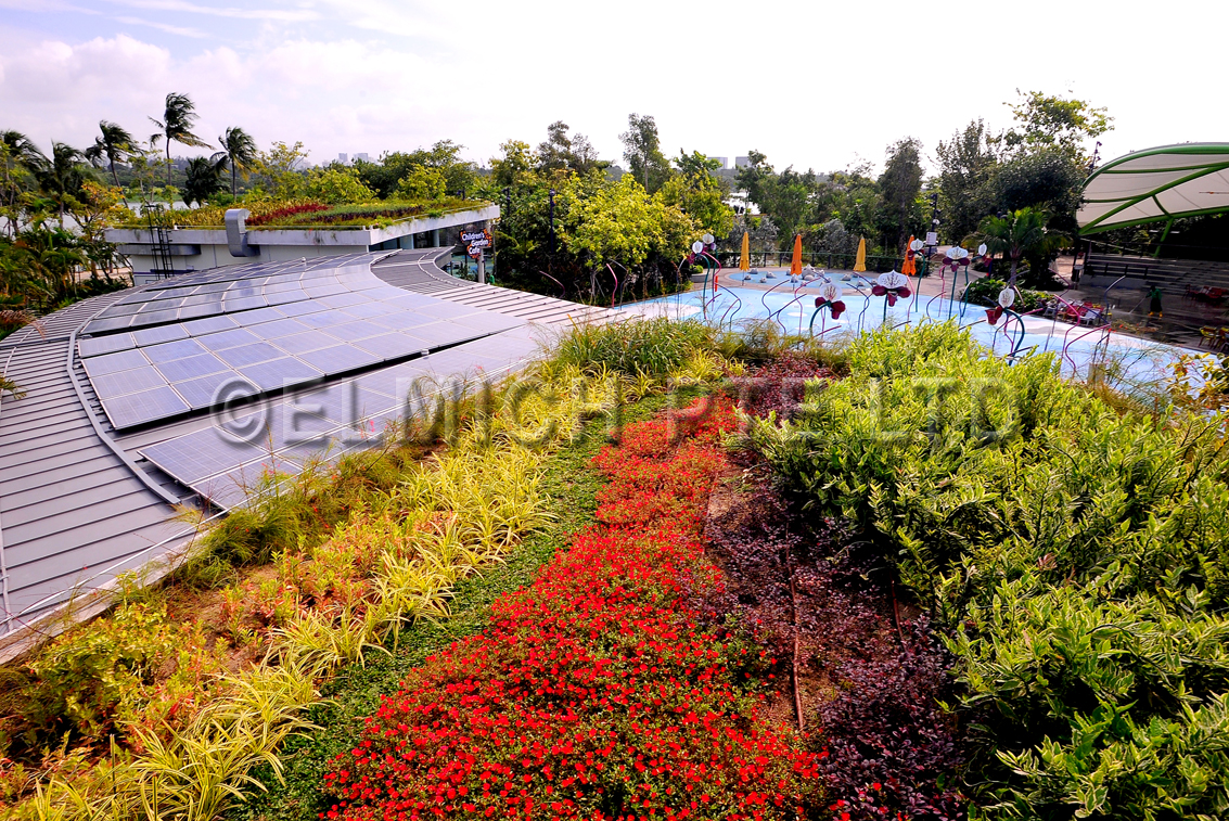 Ultra Lightweight Extensive Green Roof Gardens By The